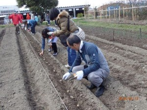 ④b 保護者も種ジャガイモを植える